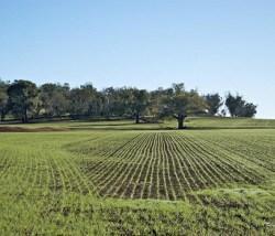 imu-terreni-agricoli-e-non-decreto-ieri-in-cdm